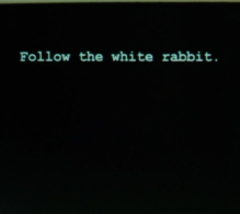 Matrix -follow-the-white-rabbit